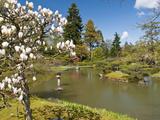 Japanese Gardens Part of Washington Park Arboretum, Seattle, Washington, USA Photographic Print by Trish Drury