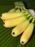Banana Bunch (Musa Acuminata, Musa Balbisiana), Phuket, Thailand Photographic Print by Nico Tondini