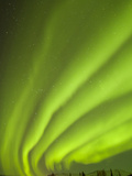 Aurora Borealis, Chena Hot Springs Lodge, Fairbanks, Alaska, USA Photographic Print by Cathy & Gordon Illg