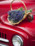 Lavender Bunches Rest on an Old Farm Pickup Truck, Washington, USA Photographic Print by Brent Bergherm