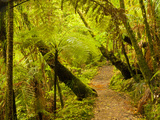 Trail, Waitakere Range Regional Park, North Island, New Zealand Photographic Print by Cathy & Gordon Illg