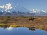 Mt. Mckinley, Denali National Park, Alaska, USA Fotografisk trykk av Hugh Rose