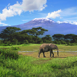 A Lone African Elephant (Loxodonta Africana) by Mt. Kilimanjaro, Amboseli Nat'l Park, Kenya Fotografisk tryk af Miva Stock