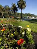 Poppy Flowers, Picton, Marlborough, South Island, New Zealand Photographic Print by Douglas Peebles