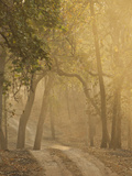 Early Morning Fog, Bandhavgarh National Park, India Photographic Print by Joe & Mary Ann McDonald