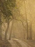 Early Morning Fog, Bandhavgarh National Park, India Photographic Print by Joe & Mary Ann McDonald