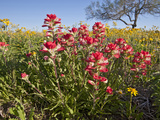 Wildflowers, Texas, USA Photographic Print by Larry Ditto