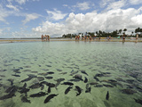Fish, Porto De Galinhas, Pernambuco, Brazil Photographic Print by Anthony Asael