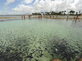 Fish, Porto De Galinhas, Pernambuco, Brazil Photographic Print by Anthony Asael