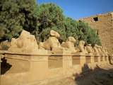 Sphinxes, Temple of Karnak, Temple of Luxor, Avenue of Sphinxes, Luxor, Egypt Photographic Print by Miva Stock