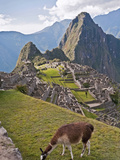 Llamas Have Taken Residence Amongst the Agricultural Terraces, Machu Picchu, Peru Photographic Print by Roberto Gerometta