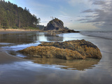 Low Tide, Olympic National Park, Washington, USA Photographic Print by Tom Norring