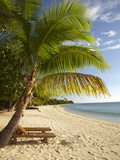 Beach and Palm Trees, Plantation Island Resort, Malolo Lailai Island, Mamanuca Islands, Fiji Photographic Print by David Wall