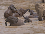 Elephants Bathing in the River, Samburu National Reserve, Kenya Photographic Print by Keren Su