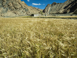 Fields, Markha Valley, Ladakh, India Photographic Print by Anthony Asael