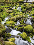 Lush Area with Small Creek, Olympic National Park, Washington, USA Photographic Print by Tom Norring