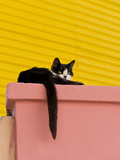 Cat Resting on Pillar, Barrio La Boca, Buenos Aires, Argentina Photographic Print by Roberto Gerometta