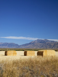 Hay Bales, Butte County, Idaho, USA Photographic Print by Jamie & Judy Wild