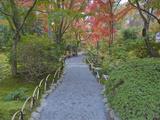 Tenryuji Temple Garden  Sagano  Arashiyama  Kyoto  Japan