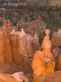 Thor's Hammer, Hoodoo, Bryce Canyon National Park, Utah, USA Photographic Print by Tom Norring
