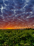 Abeja Winery at Dawn, Walla Walla, Washington, USA Photographic Print by Richard Duval