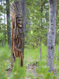 Indian Carving in Tree, Sawtooth National Recreation Area, Idaho, USA Photographic Print by Jamie & Judy Wild