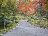 Tenryuji Temple Garden, Sagano, Arashiyama, Kyoto, Japan Photographic Print by Rob Tilley