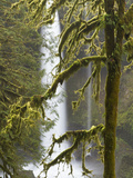 A Moss Covered Tree Frames North Falls at Silver Falls State Park, Oregon, USA Photographic Print by William Sutton