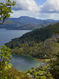 Queen Charlotte Track, Marlborough Sounds, South Island, New Zealand Photographic Print by Douglas Peebles