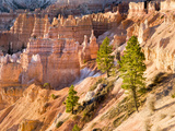 Trees Grow in Limestone at Bryce Canyon National Park, Utah, USA Photographic Print by Tom Norring