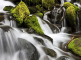Waterfall, Olympic National Park, Washington, USA Photographic Print by Tom Norring