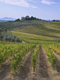 Vineyard, Chianti, Italy Photographic Print by Rob Tilley