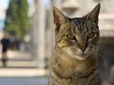 Feral Cat, Recoleta, Buenos Aires, Argentina Photographic Print by Inger Hogstrom