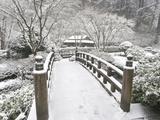Snow-Covered Moon Bridge, Portland Japanese Garden, Oregon, USA Fotografiskt tryck av William Sutton