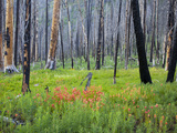 Sawtooth National Forest, Sawtooth National Recreation Area, Idaho, USA Photographic Print by Jamie & Judy Wild