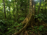Forest Scene in Masoala National Park, Madagascar Photographic Print by Andres Morya Hinojosa