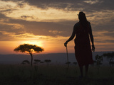 Maasai Tribesman Carrying a Stick on the Savannah at Sunset, Maasai Mara National Reserve, Kenya Fotografie-Druck von Keren Su