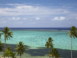 Palm Trees and Coral Reef, Crusoe's Retreat, Coral Coast, Viti Levu, Fiji, South Pacific Photographic Print by David Wall