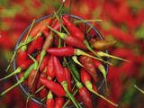 Hot Chili, Semporna, Borneo, Malaysia Photographic Print by Anthony Asael