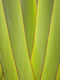 Palm Frond Pattern, Coral Coast, Viti Levu, Fiji, South Pacific Photographic Print by David Wall