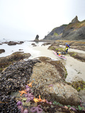 Packing a Sea Kayak on Beach, Olympic National Park, Washington, USA Photographic Print by Gary Luhm