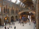 Natural History Museum, London, United Kingdom, England Photographic Print by Inger Hogstrom