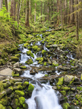 Small Creek with Waterfall, Olympic National Park, Washington, USA Photographic Print by Tom Norring