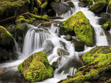 Lush Waterfall, Olympic National Park, Washington, USA Photographic Print by Tom Norring