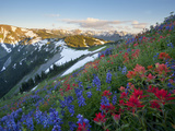 Indian Paintbrush and Lupine, Olympic National Park, Washington, USA Photographic Print by Gary Luhm