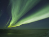 Aurora Borealis, Beaufort Sea, Alaska, USA Photographic Print by Hugh Rose