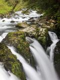 Lush Waterfall, Olympic National Park, Washington, USA Photographic Print by Tom Norring