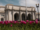 Tulips by Union Station, Washington DC, USA, District of Columbia Photographic Print by Lee Foster