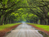 Wormsloe Plantation, Savannah, Georgia, USA Photographic Print by Joanne Wells