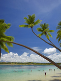 Palm Trees, Shangri-La Fijian Resort, Yanuca Island, Coral Coast, Viti Levu, Fiji, South Pacific Photographic Print by David Wall